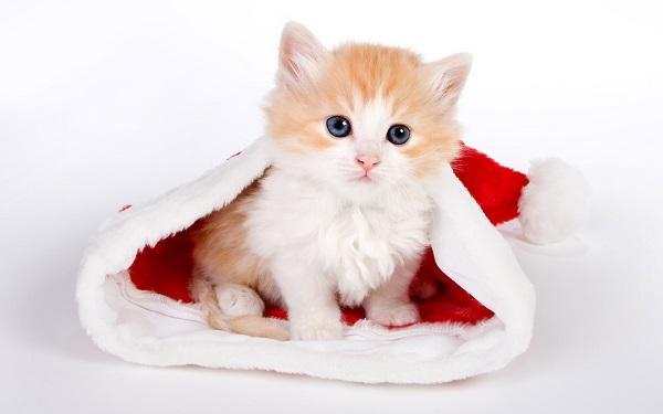 Самый приятный подарок — это домашнее животное, если ребенок о нем мечтает. Фото с сайта vb.arabseyes.com