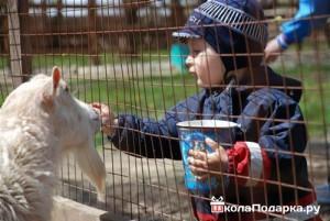 Подарок-зоопарк-ребёнку-на-3-года