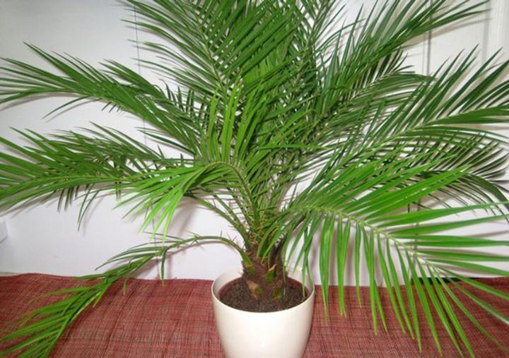 Растение в качестве недорогого подарка молодоженам на свадьбу