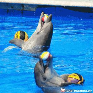 посещение-дельфинария