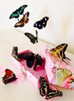 тропические бабочки из коробки